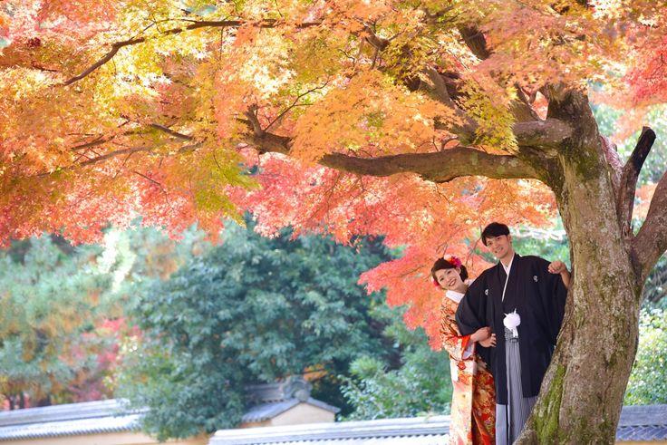 和装で前撮りを紅葉と一緒に奈良公園で洋髪の髪型やヘアスタイルと格安の髪飾りや必要な指輪の相場の料金の口コミな写真ブログ