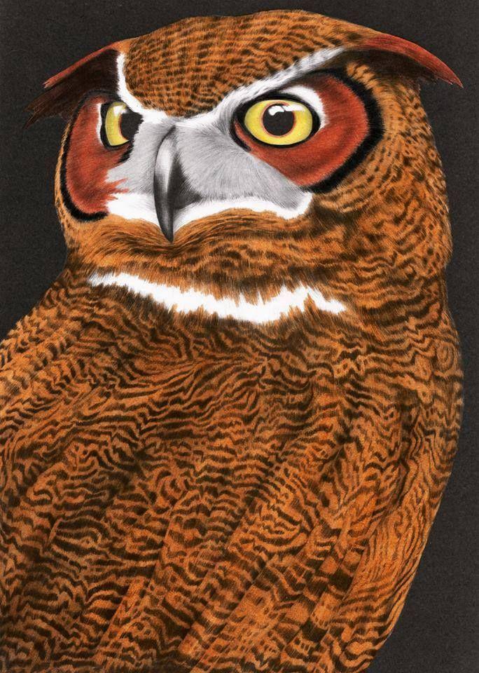 Great Horned Owl 2 B Debbie Hoskins Dunaway