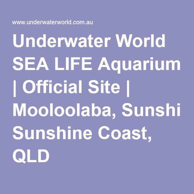 Underwater World SEA LIFE Aquarium | Official Site | Mooloolaba, Sunshine Coast, QLD