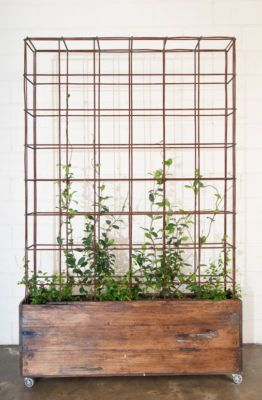 Add wheels under a large crate or wood container of choice for mobile greenery
