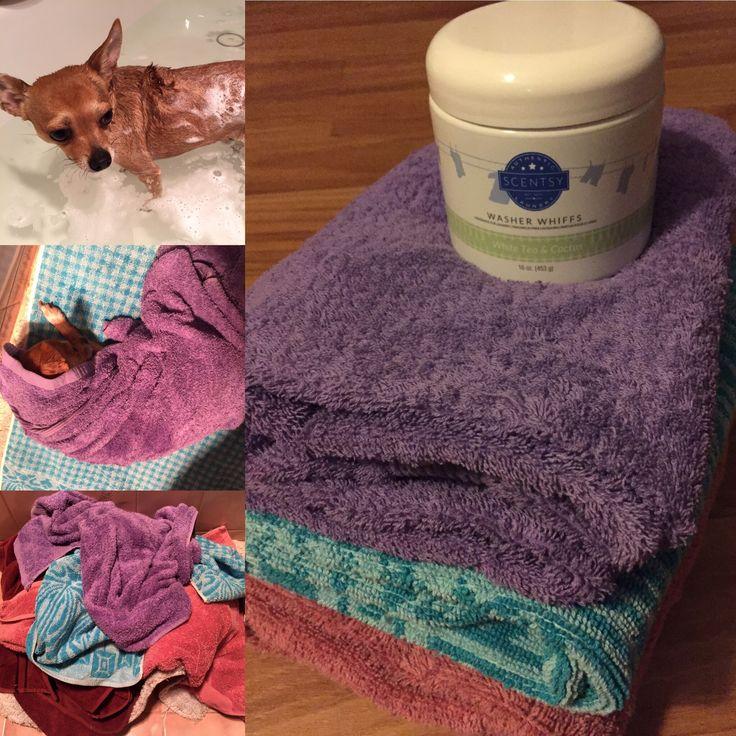 Clean dog but stinky towels?  Use washer whiffs #whiteteaandcactus #washerwhiffs #cleanlaundry #smellsamazing https://scentrestage.scentsy.com.au/
