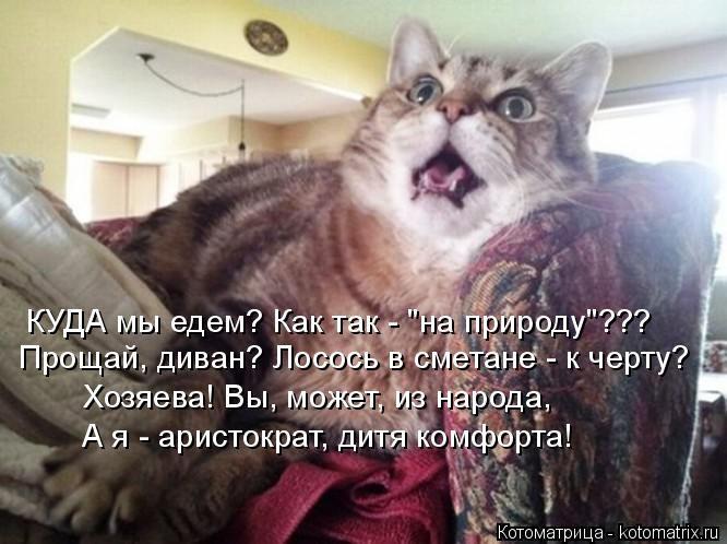 """КУДА мы едем? Как так - """"на природу""""??? Прощай, диван? Лосось в сметане - к черту? Хозяева! Вы, может, из народа, А я - аристократ, дитя комфорта!"""