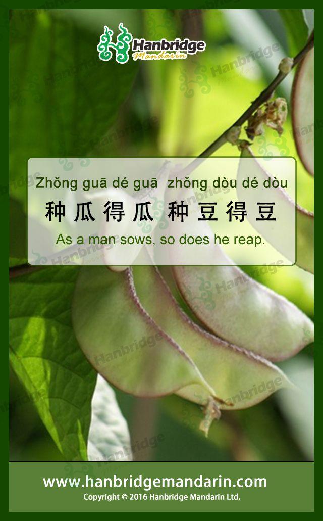 learn Chinese idiom 种瓜得瓜,种豆得豆 zhònɡ ɡuā dé ɡuā , zhònɡ dòu dé dòu