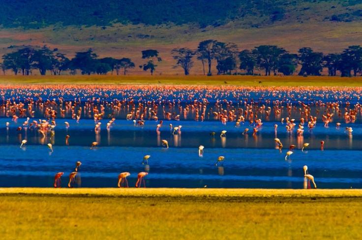 Lake magadi kenya african lakes islands camps