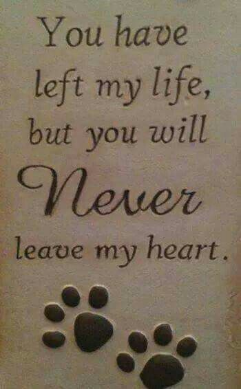 Tarrah Dianah Brown Harrison our precious poodle baby girl. We miss you. Until we meet again. Love you forever!