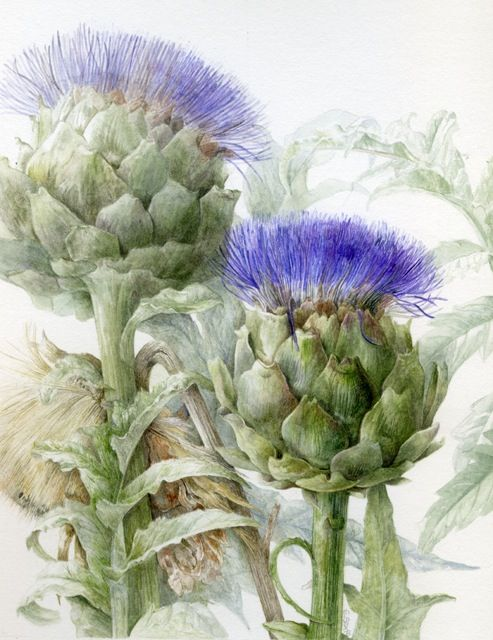 Pretty delicate colours and detailing - Elaine Searle       Watercolor