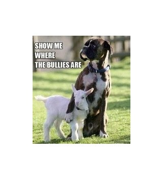 :)True Friends, Best Friends, Boxers Dogs, Big Brother, My Heart, Funny, Big Dogs, Baby Goats, Animal