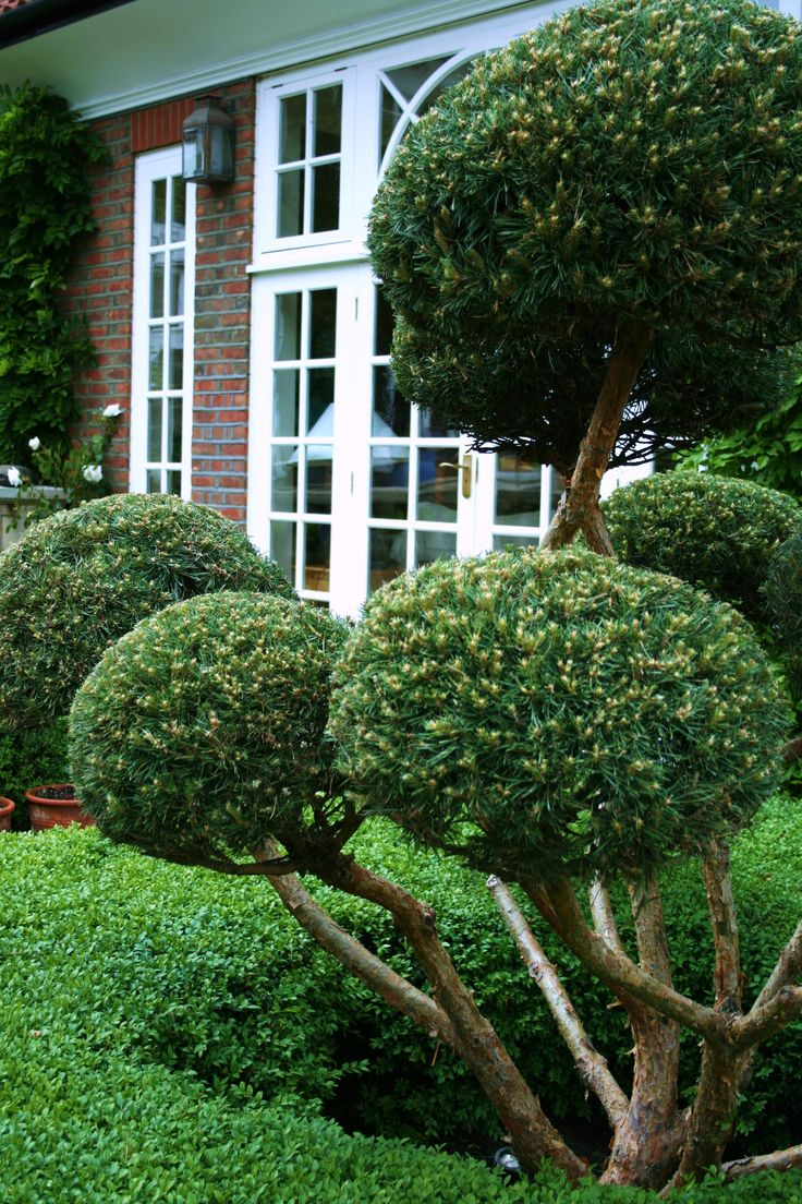 Find This Pin And More On Garden Design Topiary
