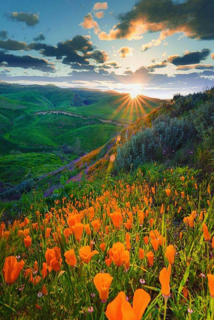 Доброе утро картинки с природой красивые необычные, тортов день