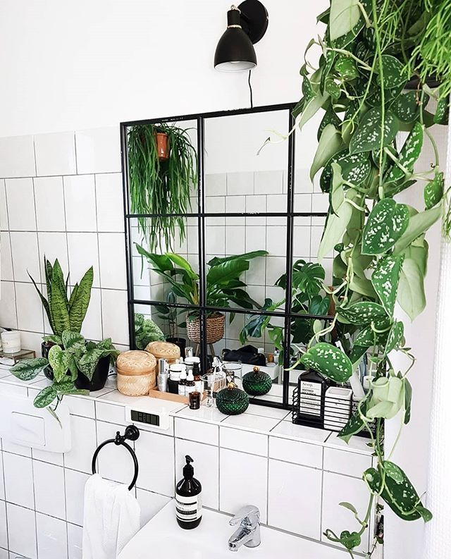 8 Beautiful Hanging Plants Perfect For Apartments Thefab20s