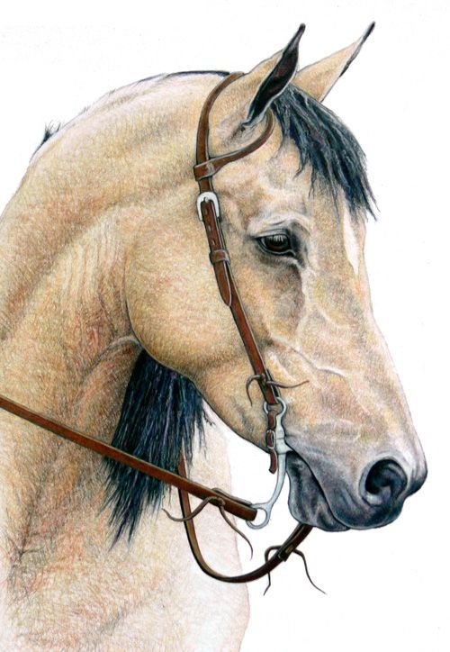 Lovely expression on horse's face, soft and gentle. Kudos to artist.