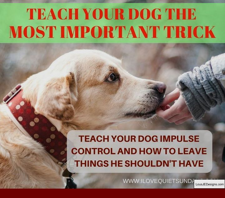 Puppy Potty Training Tips Winter And Pics Of Dog Training Tips For
