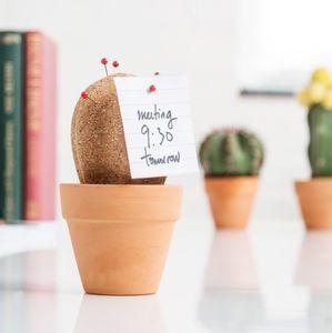 Cork Cactus Desk Tidy | Pinterest | Desk tidy, Cacti and Cork