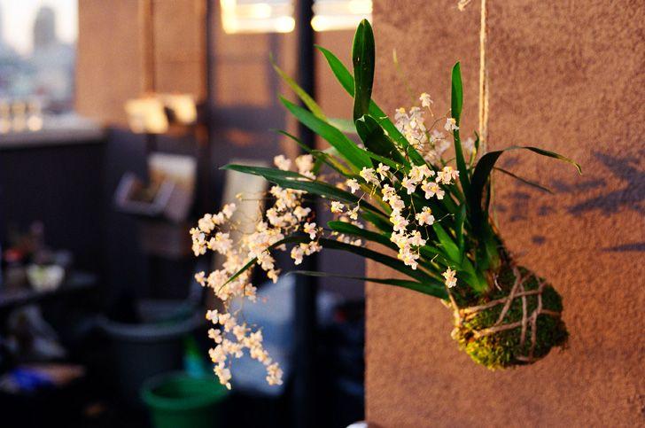 kokedama ball string garden | DIY: How To Make a Hanging Bonsai String Garden DIY String Garden ...