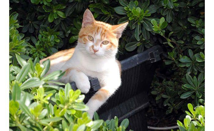 Os gatos têm hábitos higiénicos muito marcados, são animais que não gostam de fazer as suas necessidades perto da zona onde comem, como tal escolhem lugare