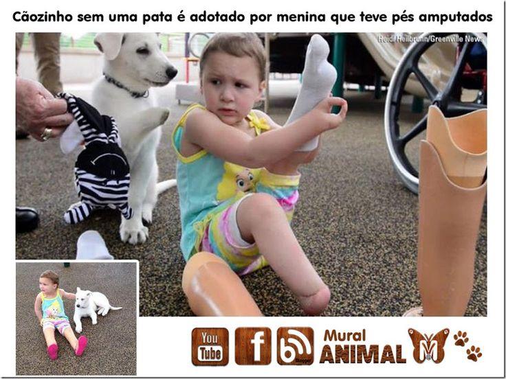 Mural Animal: Cãozinho sem uma pata é adotado por menina que teve pés amputados