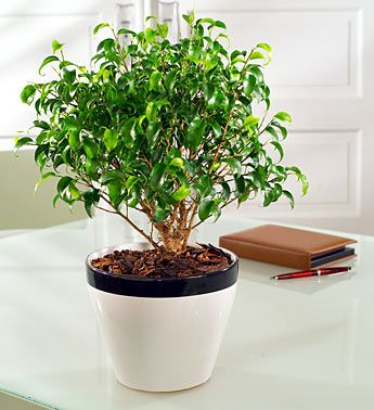 Houseplants safely filter toxins at work and at home.    http://www.freshnlean.com/blog