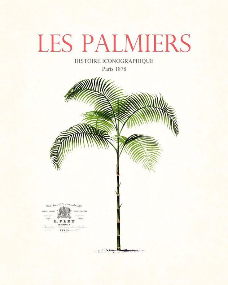 Vintage French Palm Tree Collage No. 13 - Botanical Print