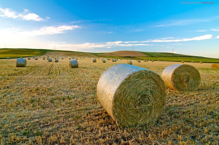 Basilicata Covoni di grano