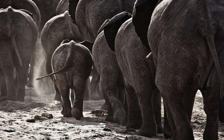 Matetsi Private Game Reserve, Victoria Falls