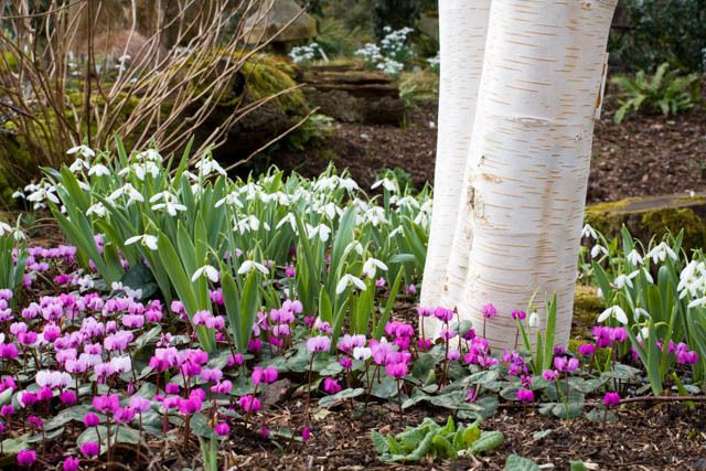 Garden Ideas Border Ideas Plant Combinations Bulb