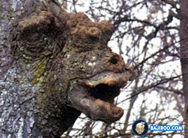 weird tree funny plant images pictures bajiroo photo gallery 8 Most Funny Trees on Earth You Never Seen Before (15 Pictures)