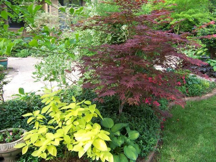 The yellow shrub is a garden glow dogwood (cornus hesseyii
