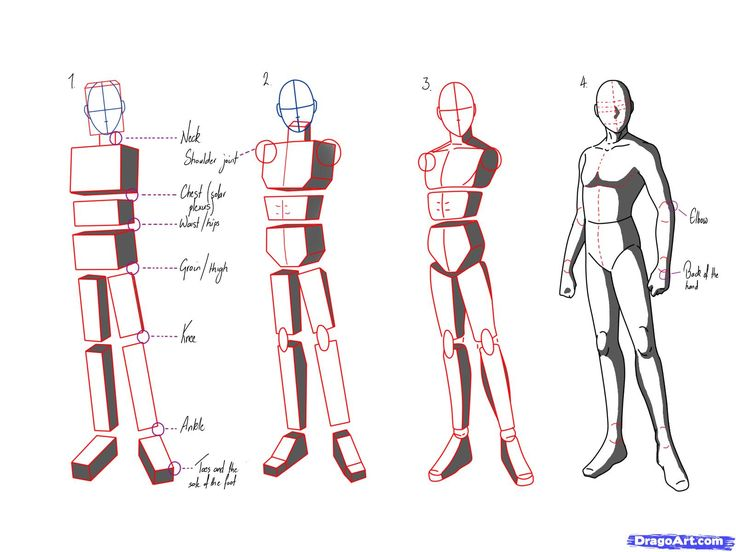anime male anatomy - HD1600×1200