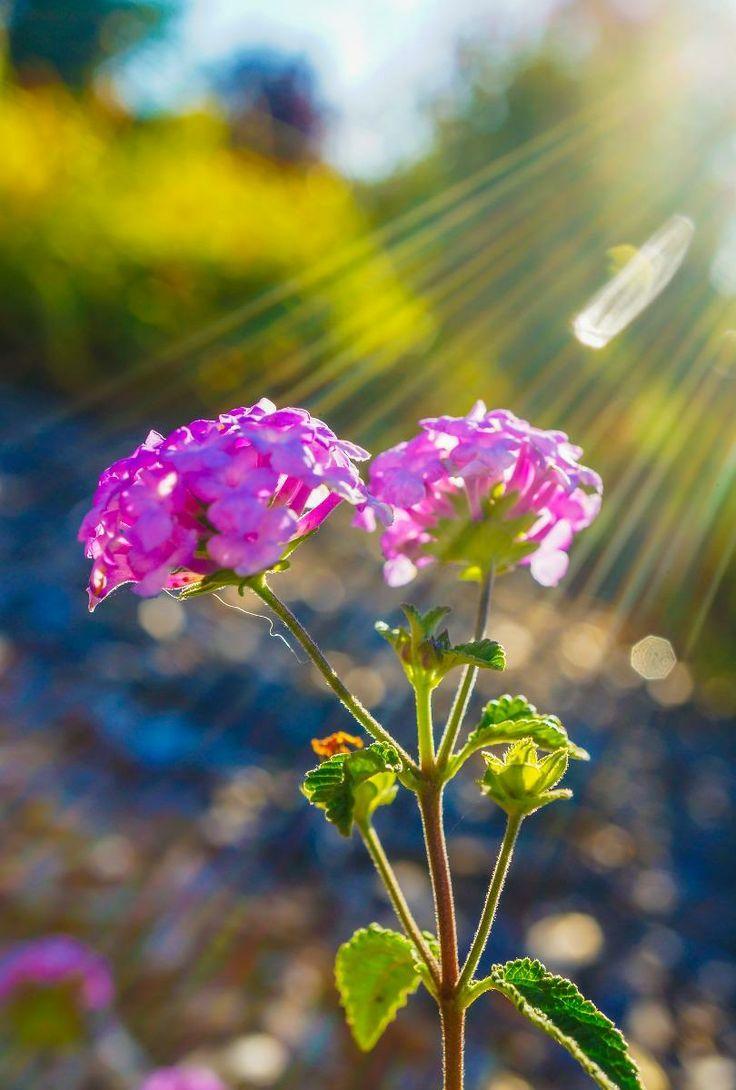 Spring Flowers Garden Pictures