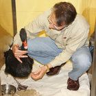 """Amanda Erika, a black swan, was badly injured while protecting her nest of six eggs as her eggs were being crushed by someone.""  ""[She] ... was brought to the West Esplanade Veterinary Clinic and Bird Hospital in Metairie."" with an injured and infected leg. Surgery was preformed by Dr. Gregory Rich and his staff with the help of Southeast Veterinary specialists, Dr. Rose Lemarie and Dr. Kenneth Ranson.  ""Rich reported recently that Amanda Erika is strong enough to swim and walk with a…"