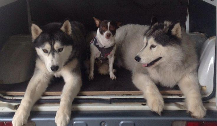 MYⓒⓞⓛⓛⓔⓒⓣⓘⓥⓔ  My Kids  Kuta , DodgeM and Maui
