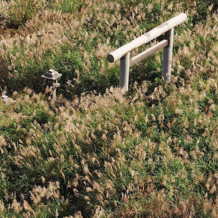 V kopcích nad Jinguashi jsou v hustém porostu stříbrné trávy schované ruiny starého japonského chrámu. Toto romantické místo opravdu stojí za návštěvu! #tofutaiwantours #tofutaiwan #životnataiwanu #cestování #taiwan  #tchajwan #tchaj-wan #tchajwannenithajsko #taiwanisnotthailand #iseetaiwan #igtaipei #igtaiwan #exploretaiwan #taiwanwalker #biglittleisland #amazingtaiwan #focus_taiwan #台灣 #대만 #ไตหวน #Тайвань #تايوان #台北 #jiufen #jinguashi #japonskychram