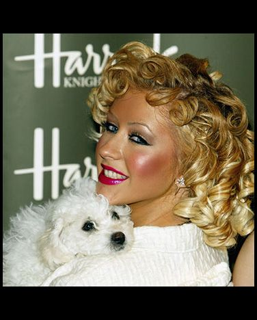 Celebrities w/ Havanese - Pinterest