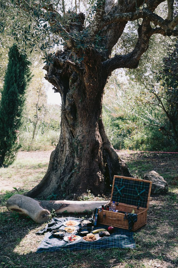 Time for a luxurious picnic beneath a beautiful olive tree. #CostaNavarino #Epicurean #Journey #Greece