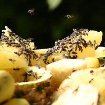 Overal fruitvliegjes... Wat nu?! Effectief fruitvliegjes bestrijden. Zorg voor een schoon huis zonder vliegjes.