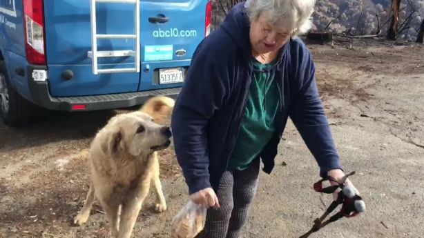 Dog That Survived California Wildfire Guarded Home For Weeks Ksl