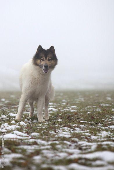 Die vorherrschenden Charaktereigenschaften des Grönlandhundes sind Energie, Beharrlichkeit und Mut. Er ist ein passionierter und unermüdlicher Schlittenhund. Menschen, auch Fremden gegenüber, verhält er sich freundlich. Wenn er als Schlittenhund verwendet wird, ist er nicht an eine bestimmte Person gebunden und ist deshalb auch nicht als Wachhund geeignet. Für Seehund und Eisbär zeigt er einen starken Jagdinstinkt.