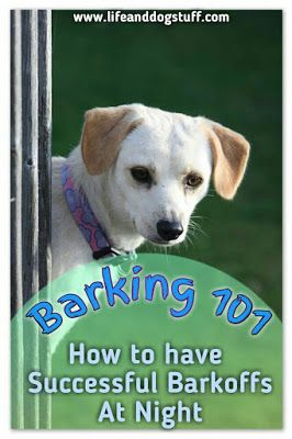 Check out our new blog post! Barking 101 - How to Have Successful Barkoffs at Night #dogs #humor