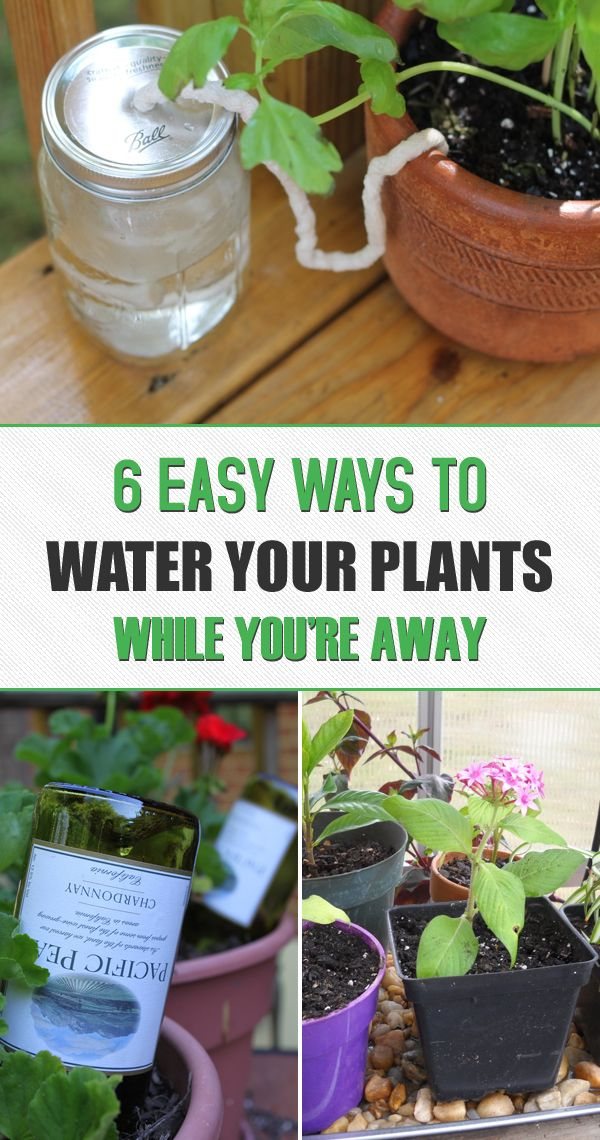 Easy Garden Ideas find this pin and more on easy gardening landscape ideas 6 Easy Ways To Water Your Plants While Youre Away