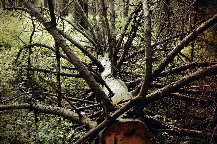 Holz Zuschnitt & Entsorgung