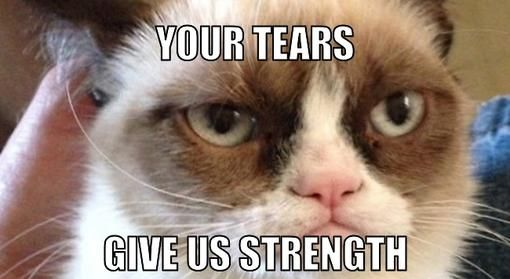 40+ Grumpy Cat Memes That You Will Love!