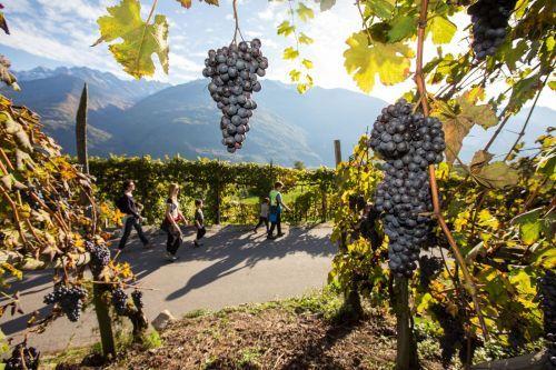 Lungo la strada dei vini della Valtellina