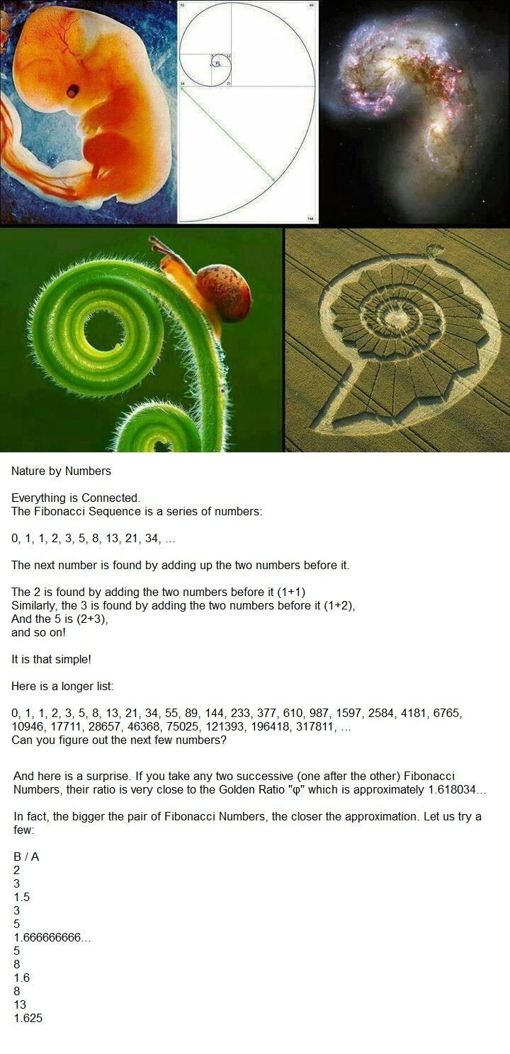 In this link below there are a series of calculations you can do yourself. Its really fun, check it out: http://www.mathsisfun.com/numbers/fibonacci-sequence.html   Fibonacci, Nature by Numbers: http://www.youtube.com/watch?v=kkGeOWYOFoA