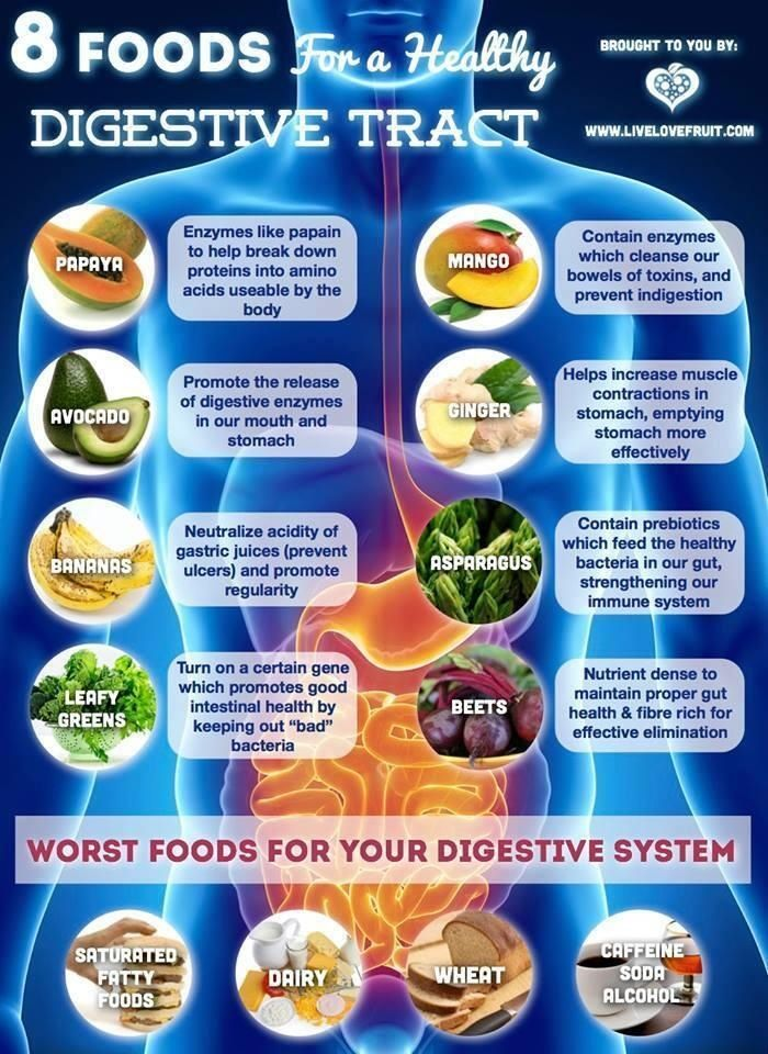 8 foods for a healthy digestive tract, and if you can't find the time to eat a truck load of food every day, there are always supplements :) Shop at NaplesNaturals.com today! #NaplesNaturals
