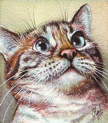 Surprised Kitty by Olga Shvartsur
