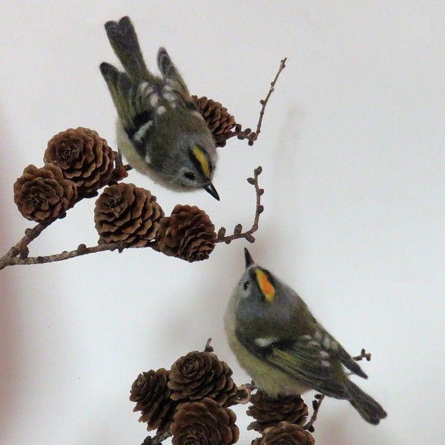 羊毛フェルト★キクイタダキ♪Goldcrest * *日本では一番小さな鳥(全長10cm) *名の由来は、頭部の頂きに黄色い冠羽があり、菊の花のように見えることから ・冠羽の中央部の内側がオレンジの方がオスです *針葉樹好きなので、唐松の枝に止めてみました * #羊毛フェルト#キクイタダキ#菊戴#ニードルフェルト#ハンドメイド#野鳥#鳥#小鳥#自然#唐松 #needlefelting#goldcrest#felting#felted#work#handmade#wildbirds #bird#instabird #instabirds #love_birds #lovelybird #handycraft