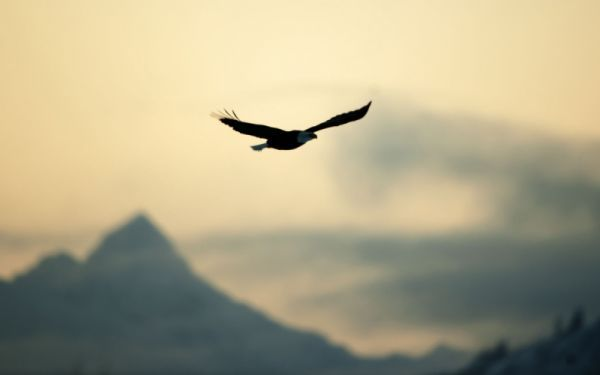 Bird Eagle Flying Freedom Nature Sky Wallpaper Birds Flying Eagle Images Bird Birds in sky desktop wallpapers free