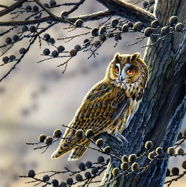 рисунок сова на ветке дерева новогодним праздникам