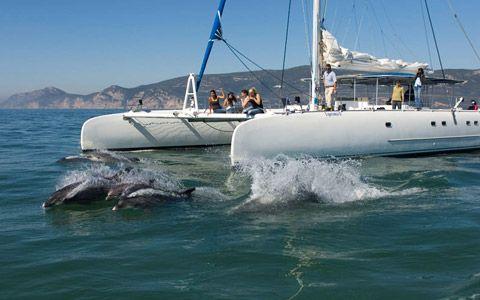 Vertigem Azul, Dolphin watching in setubal!