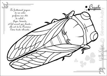 52 best insecte images on pinterest animals coloring - Dessin de cigale ...